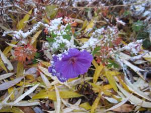 2017_Kräutergarten_Winterimpressionen02_Malve