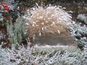 2017_Kräutergarten_Winterimpressionen16_Bürstengras