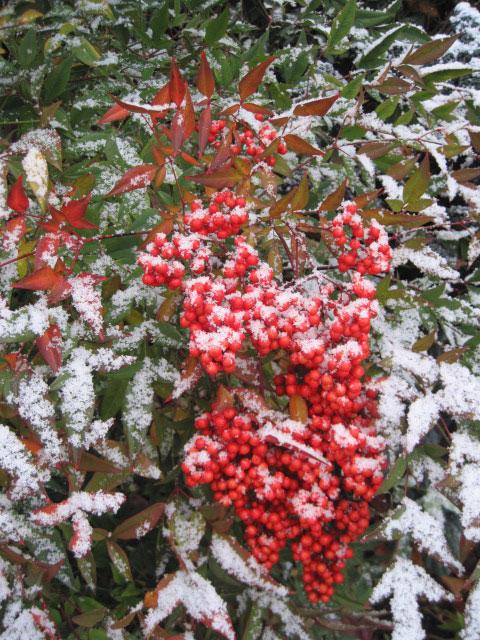 2017_Kräutergarten_Winterimpressionen17_Heiliger_Bambus